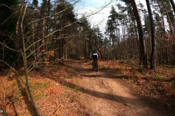 Bois des Fouches, chemin forestier